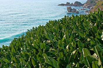 Banana Trees by the sea - Free image #343563