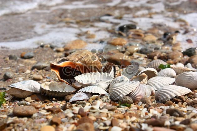 Sea shell texture - Free image #344103