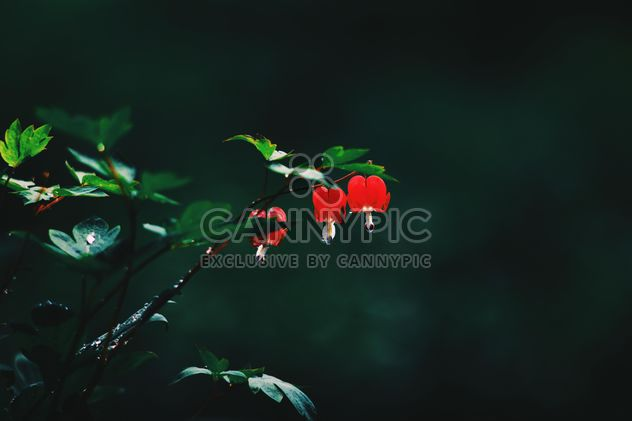 Small red flowers on twig in garden - Free image #345123