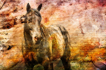textured horse - Free image #346893