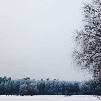 Beautiful winter landscape with white trees - бесплатный image #347333