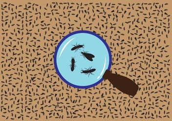 Termite Magnifying Glass Vector - Free vector #348213