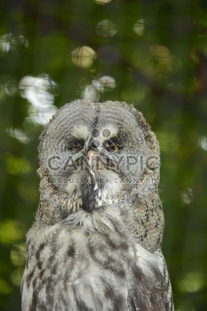Portrait of owl on natural green background - image #348423 gratis