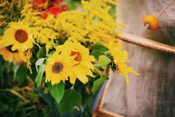 Closeup of beautiful sunflowers in garden - image #348653 gratis