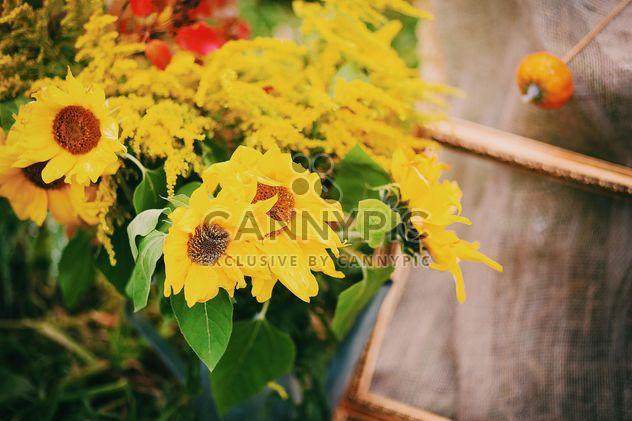 nahaufnahme des sch nen sonnenblumen im garten kostenloser bild download 348653 cannypic. Black Bedroom Furniture Sets. Home Design Ideas