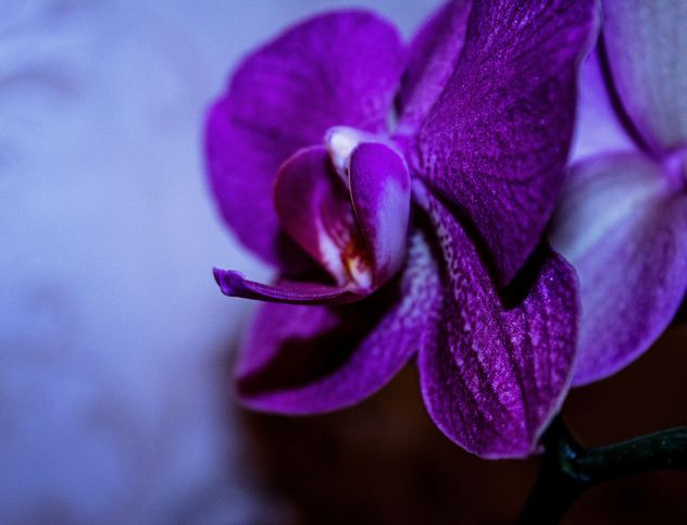 Closeup of purple orchid flower - бесплатный image #348673