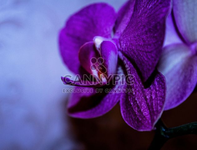 Closeup of purple orchid flower - Free image #348673