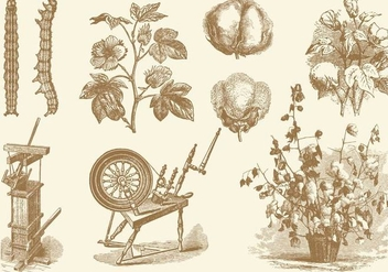 Cotton Old Style Drawing Vectors - vector gratuit #349123