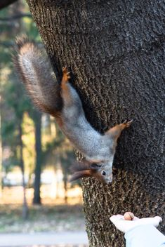 Squirrel on the tree - image #350293 gratis