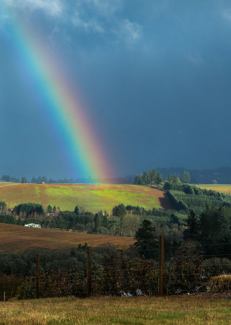 Rainbow Hunt - Free image #351573