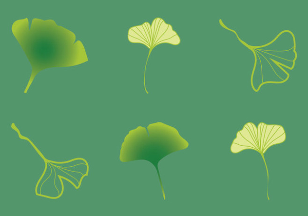 Free Ginko Vector Illustration - vector gratuit #353233
