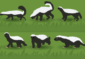 Honey Badger Vector - vector #356703 gratis