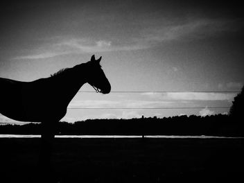 black beauty - image gratuit #363473