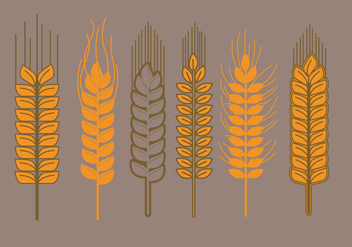 Wheat Stalk Vectors - бесплатный vector #363733