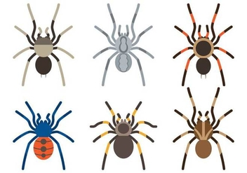 Tarantula Species - vector #366463 gratis