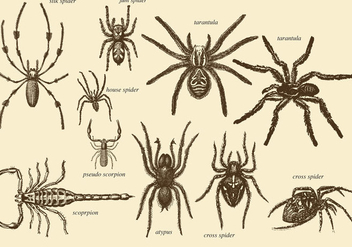 Old Style Drawing Arachnids - Kostenloses vector #366863