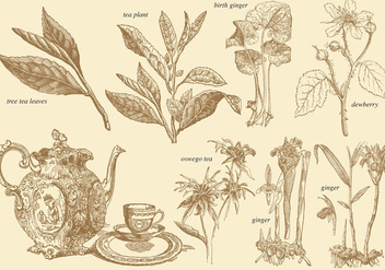 Old Style Tea Plants - vector gratuit #367163