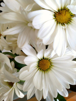 Petals of white,centers of yellow - image #367883 gratis