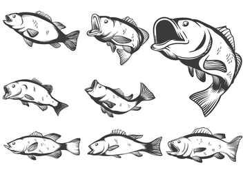 Bass Fish Vectors - vector #368283 gratis
