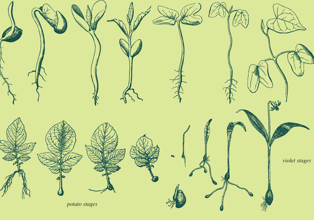 Vector Grow Up Plants - vector gratuit #368903