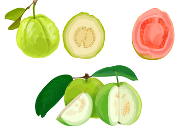Guava illustration - Free vector #368983