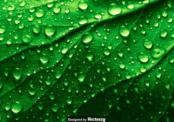Realistic Green Leaf Texture With Water Drops - Vector - Free vector #371193
