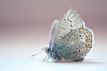 The butterfly with blue wings - image #371483 gratis