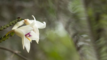 Wild orchid - Kostenloses image #372823