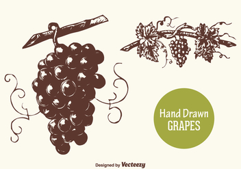 Free Hand Drawn Grapes Vector - бесплатный vector #372923