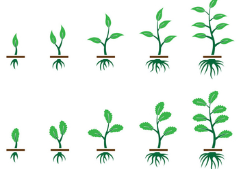 Grow Up Plant Vector - Free vector #372933