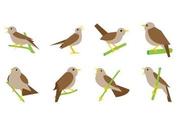 Free Nightingale Vector - vector #374593 gratis