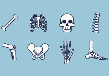 Free Human Skeleton Vector - бесплатный vector #381683