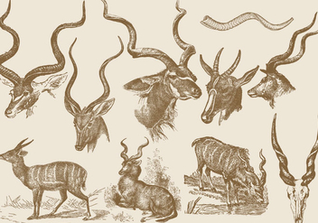 Kudu Drawings - vector gratuit #382203