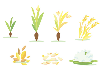 Rice Field Cycle Vector Set - vector gratuit #383003