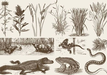 Swamp Fauna And Flora - vector gratuit #384263