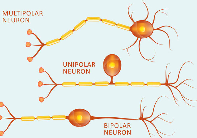 Neuron Types - Free vector #384403