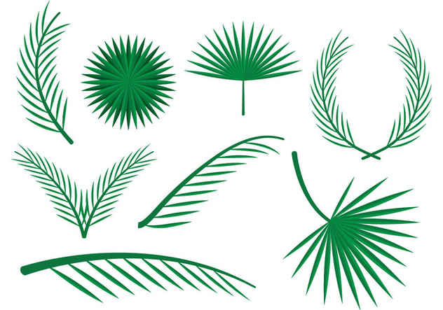 Free Palm Leaves Vector Ornaments - бесплатный vector #385263