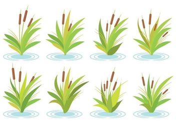 Free Cattails Vector - Kostenloses vector #385453