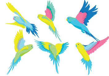 Budgie Vector - Free vector #385843