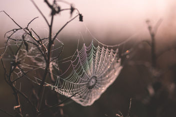 Dew on a spider's web - image gratuit #385933