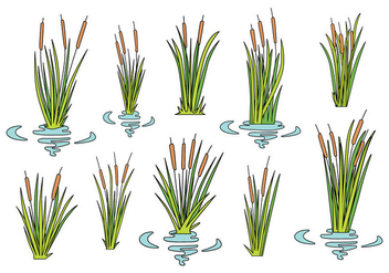 Free Cattails Icons - Free vector #387323