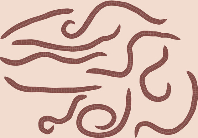 Earth Worm Set Vector - Free vector #387693