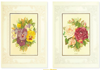 Pansy Vintage Flower Illustrations - vector gratuit #387803