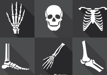 Human Skeleton Vector Set - Kostenloses vector #388133