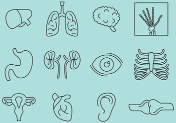 Bones And Organs Icons - vector gratuit #388213