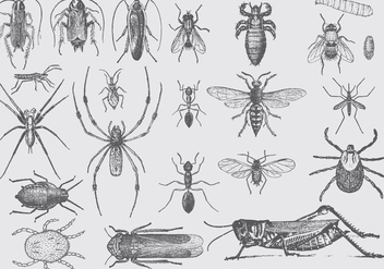 Vintage Pest Drawings - vector gratuit #391783
