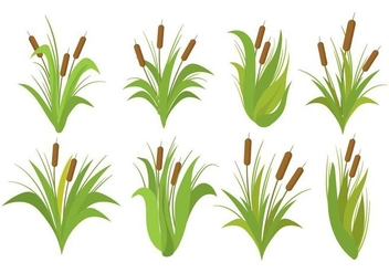 Free Cattails Vector Set - Kostenloses vector #393133