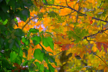 Fall Colors - Free image #396303