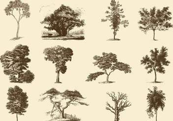 Sepia Trees Illustrations - vector gratuit #396813