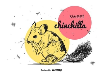 Sweet Chinchilla Vector - бесплатный vector #397383